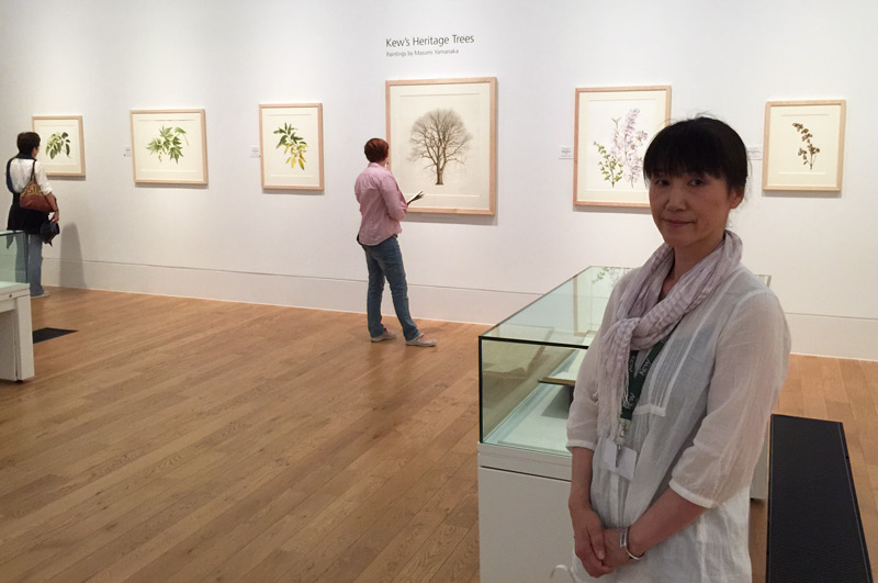 Masumi Yamanaka with her paintings in the main gallery of the Shirley Sherwood Gallery of Botanical Art