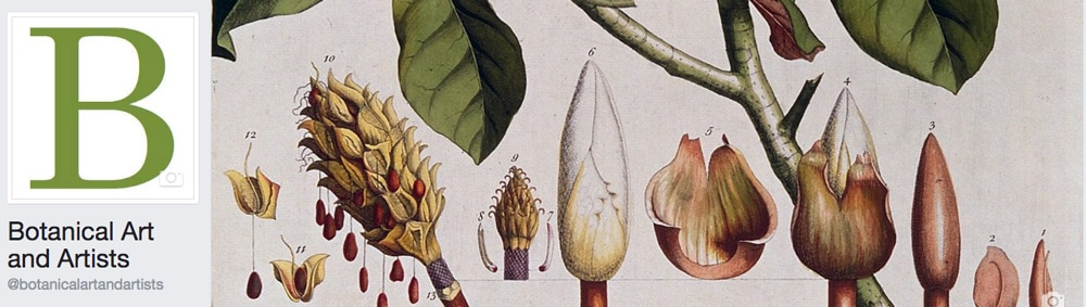 This was the first image for my facebook page for botanical art