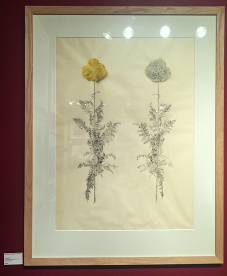Achillea (August 2017, graphite and pencil on Yuki Gampi, 61x85cm) Georgia Jennings Moors