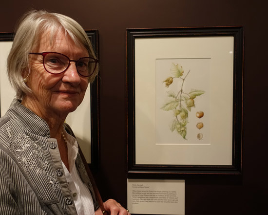Grete Ascough with her painting of Corylus avyllana