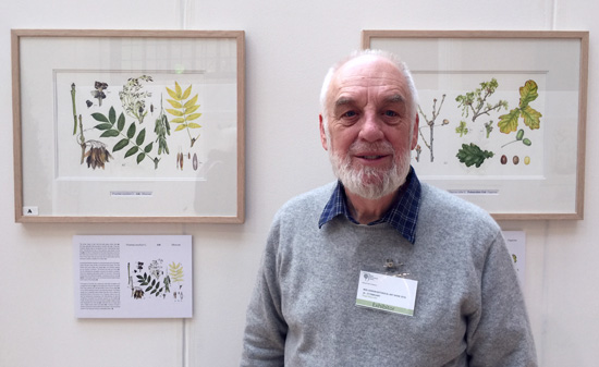 Roger Reynolds won a Gold Medal at the 2016 RHS Botanical Art Show in London - for