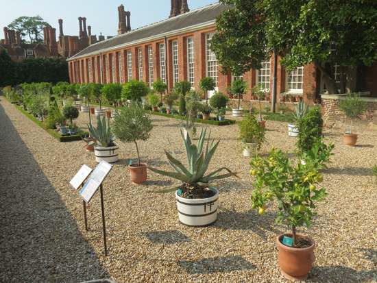 Hampton Court Palace: Lower Orangery Garden of Exotic Plants