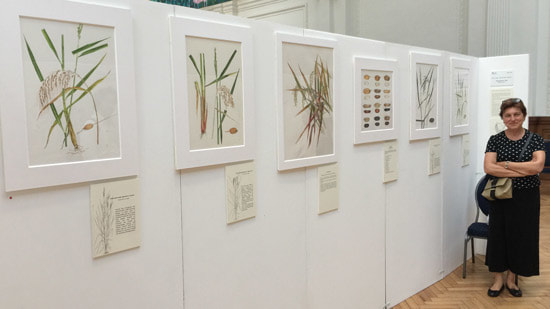 Angela Petrini - Rice in Italy- Old & New Cultivars