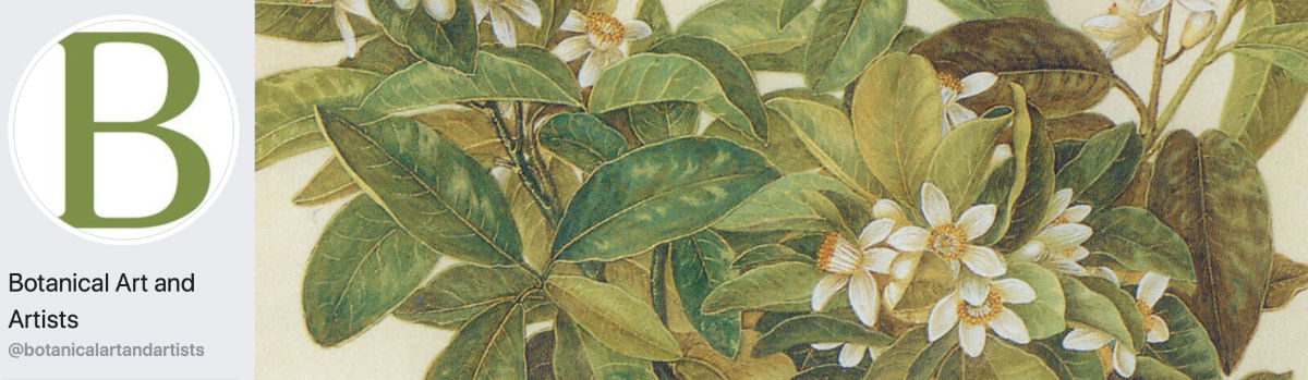 Botanical Art and Artists Facebook Page Banner - Autumn 2017