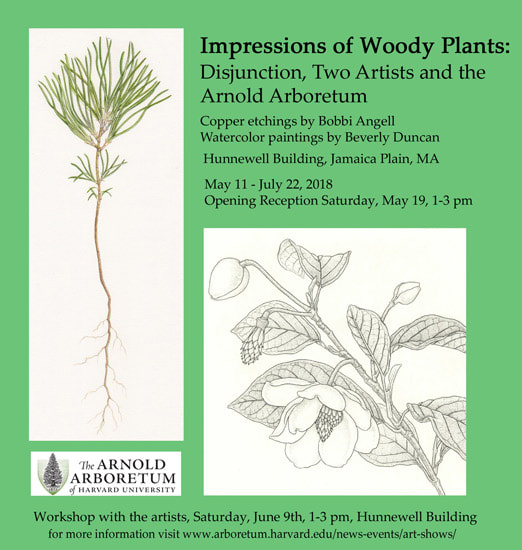 Impressions of Wood Plants Bobbi Angell Beverley Duncan