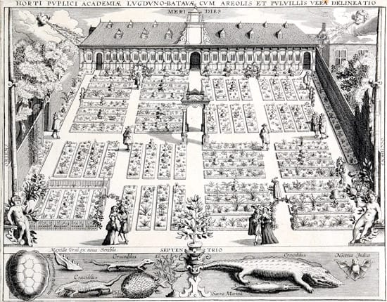 Engraving of the Hortus botanicus in Leiden (1610)