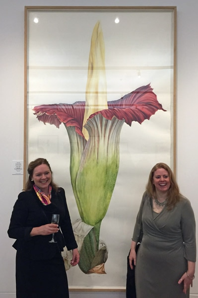 Life size painting of the Titan Arum at RBGE painted by Jacqui Pestell MBE (on left), Sharon Tingey GM (on right) and Işık Güner GM.