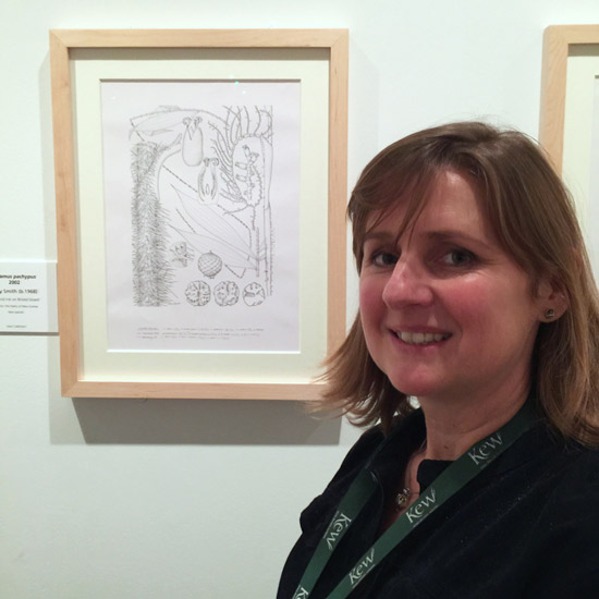 Lucy T. Smith with one of the pen and ink drawings completed for a Kew Gardens project - photographed at the Shirley Sherwood Gallery (2014)